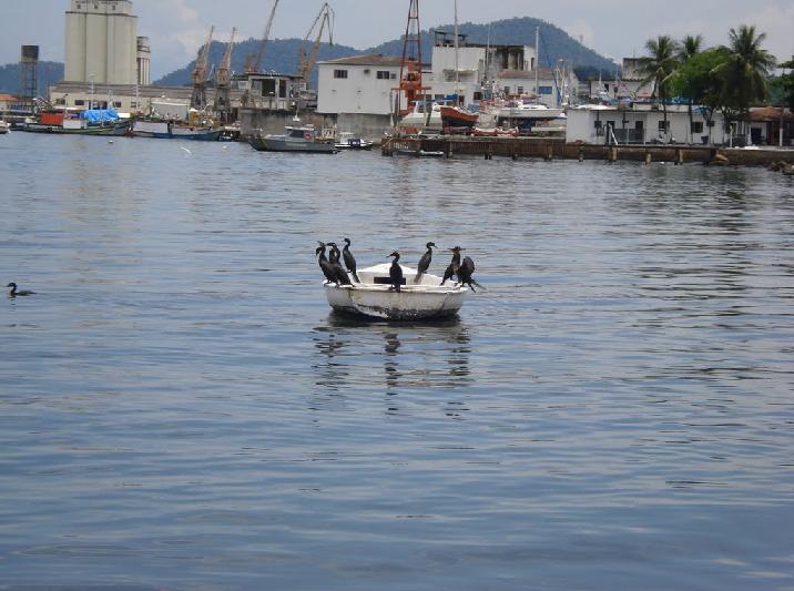 Aves marinas descansando tras su pesca.