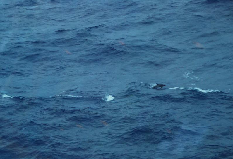 Salta el delfin